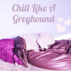Lazy Greyhound