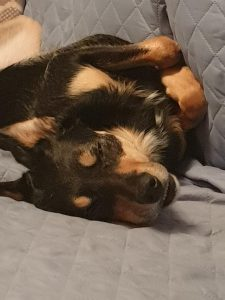 Chilled Dog